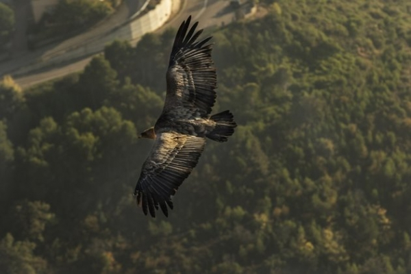 Birding in Pyrenees