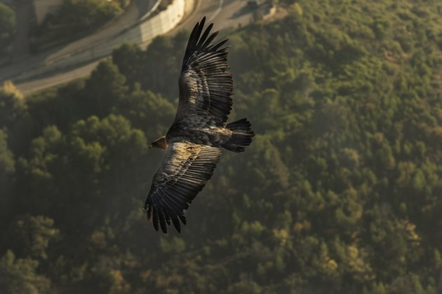 Pyrenees Travels: A vulture of Guara Park